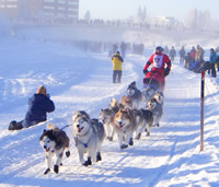The Yukon Quest, a race for entrepreneurs